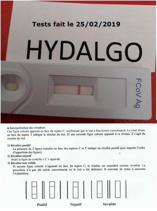 Hydalgo